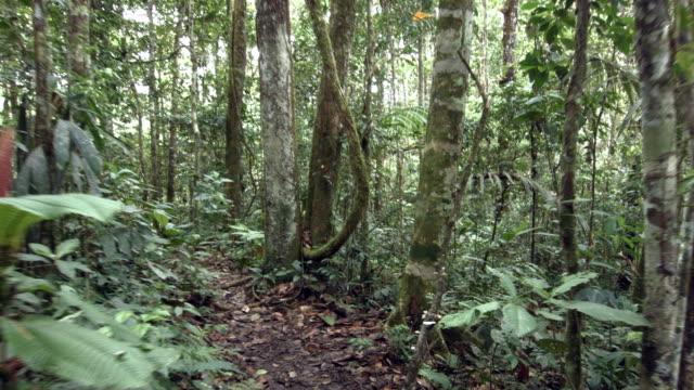 Walking along a path through Amazonian rainforest in Ecuador.