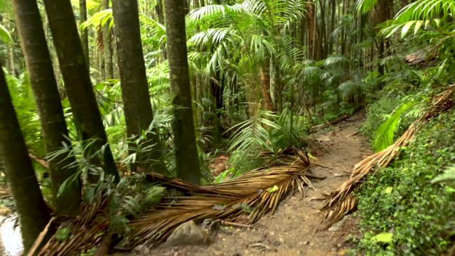 walking along hiking trail in australian rainforest 4k pov - national park stock videos & royalty-free footage