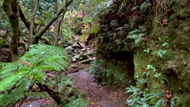 Walking Along Hiking Trail in Australian Rainforest 4K POV