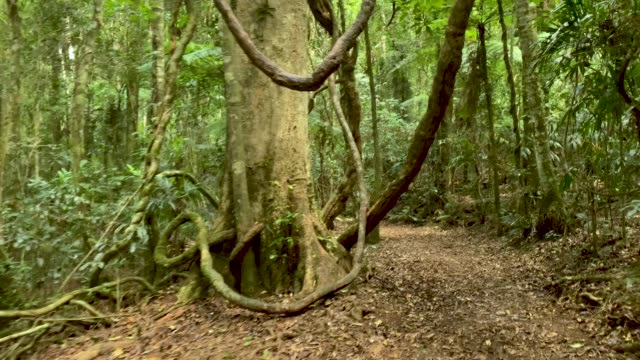 walking along hiking trail in australian rainforest 4k pov - rainforest stock videos & royalty-free footage