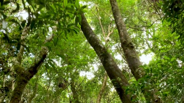 walking along hiking trail in australian rainforest showing tree canopy 4k pov - non urban scene stock videos & royalty-free footage