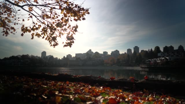 walking along the seawall with color trees during fall in the morning - autumn stock videos & royalty-free footage
