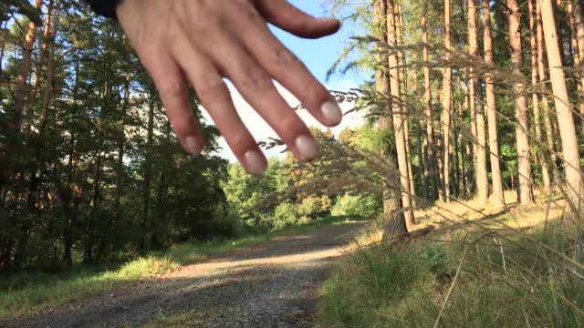 Walking and touching blade of grasse