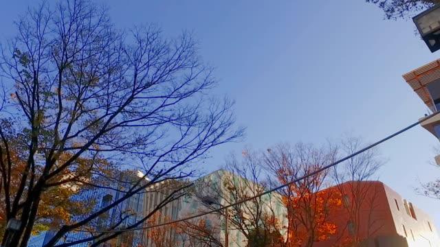 「pov 」、ウォーキング、原宿、東京,日本 - 水平アングル点の映像素材/bロール