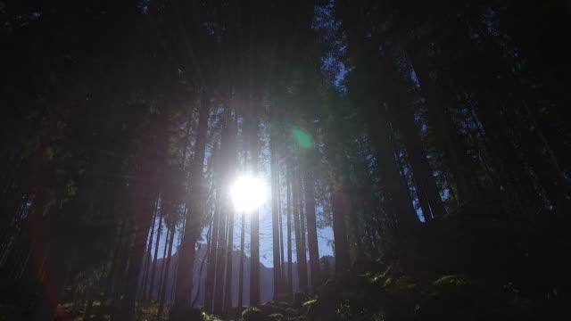 vídeos y material grabado en eventos de stock de paseando por el lago de carezza, italia - pino conífera