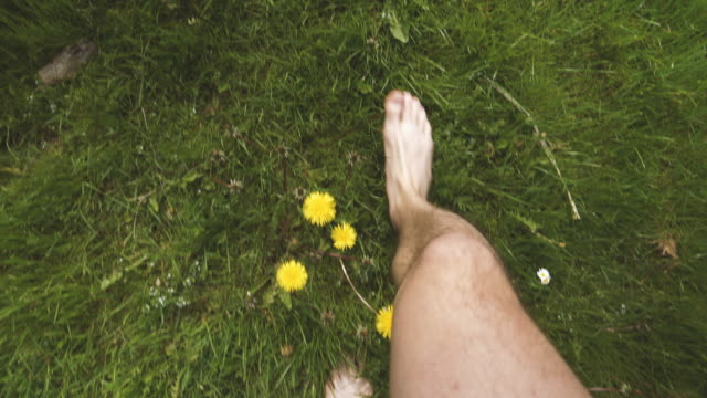 Walking Barefoot among Dandelion