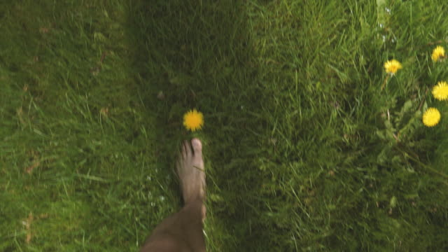 walking barefoot among dandelion - lawn stock videos & royalty-free footage