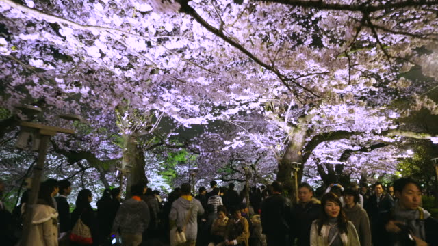 Walking camera captures crowd at night, who came here for to see Yozakura (Night flower viewing) at Chidorigafuchi of The Imperial Palace.The promenade is like a Cherry Blossoms Tunnel, which is surrounded by illuminated rows of Cherry blossoms trees.