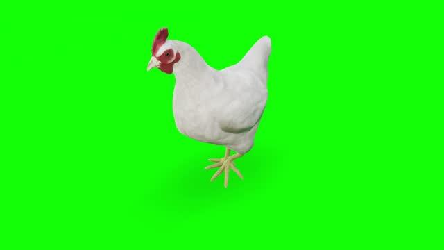 vídeos de stock, filmes e b-roll de frango ambulante na tela verde. o conceito de animal, vida selvagem, jogos, de volta à escola, animação 3d, curta-metragem, filme, desenho animado, orgânico, chave croma, animação de personagem, elemento de design, temas definidos, loopable - efeito especial
