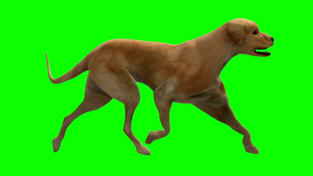 walking dog green screen (loopable) - dog and cat stock videos and b-roll footage