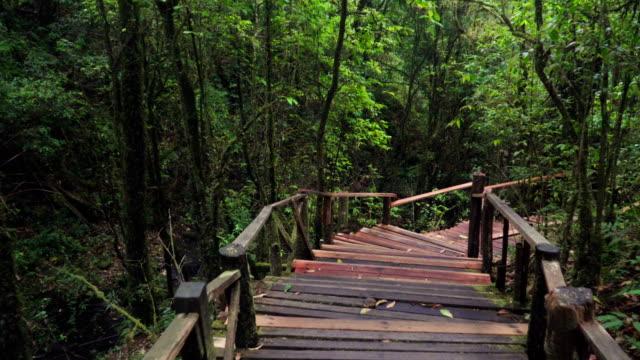 caminando por el sendero de madera en bosque profundo tropical en el norte de Tailandia