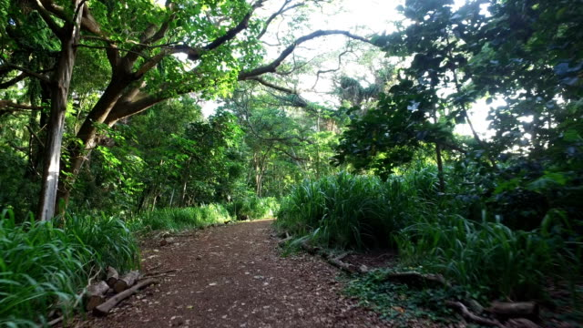 fuß hinunter versteckten weg in maui tropical forest - hawaiianische kultur stock-videos und b-roll-filmmaterial