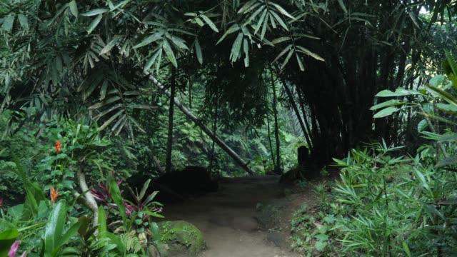 vídeos de stock e filmes b-roll de walking down jungle path - oceano pacífico do sul