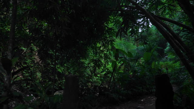 walking hiking along tropical forest in bali jungle - ubud district stock videos & royalty-free footage