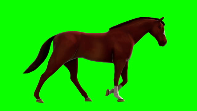 cammina un cavallo verde schermo (ad anello - cavallo equino video stock e b–roll