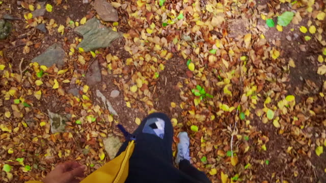walking in a beech forest with leaf carpet during autumn with beautiful colors in spain. - audio available stock videos & royalty-free footage