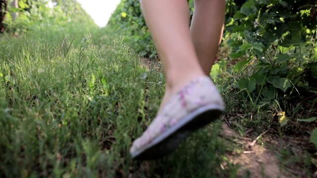 ブドウ園でウォーキング - 人の脚点の映像素材/bロール