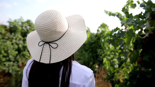 walking in a vineyard - vineyard stock videos and b-roll footage