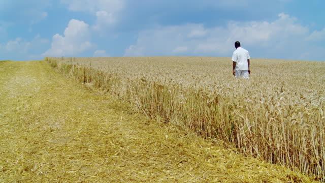 HD DOLLY: Walking In A Wheat Field