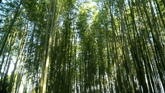 日本京都嵐山竹林漫步 - bamboo plant 個影片檔及 b 捲影像
