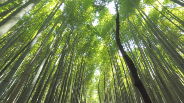 walking in arashiyama bamboo forest - bamboo plant stock videos and b-roll footage