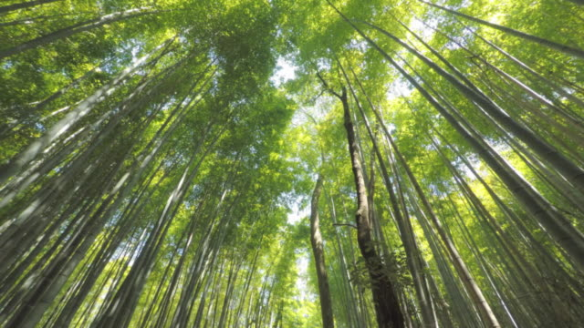 walking in arashiyama bamboo forest - serenità video stock e b–roll