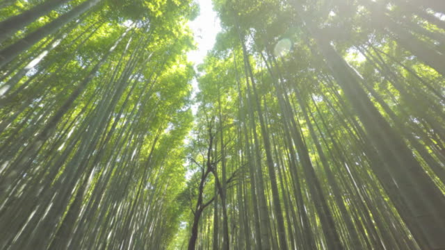 walking in arashiyama bamboo forest - zona arborea video stock e b–roll