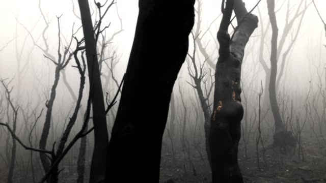 walking in atmospheric burnt forest after bush fire, bare trees and thick fog - burnt stock videos & royalty-free footage
