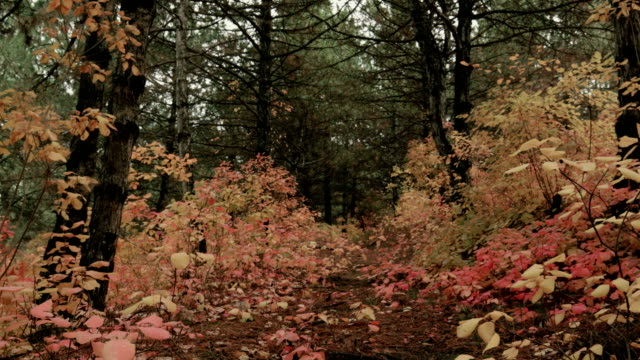 walking in autumn forest - copse stock videos & royalty-free footage