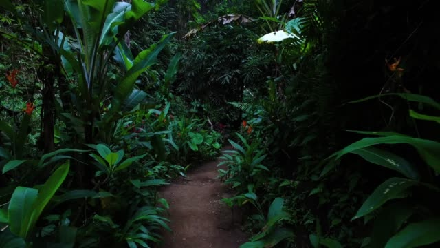 walking in bali jungle - bali stock videos & royalty-free footage