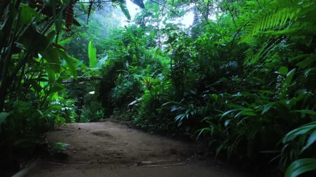 walking in bali jungle - strada in terra battuta video stock e b–roll