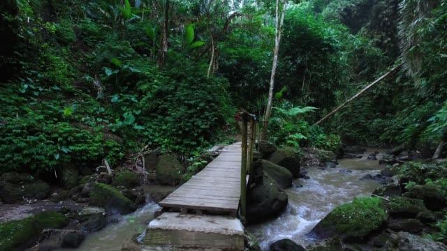 walking in bali jungle - thoroughfare stock videos & royalty-free footage