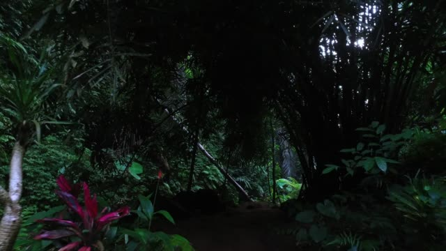 walking in bali jungle - leaf stock videos & royalty-free footage
