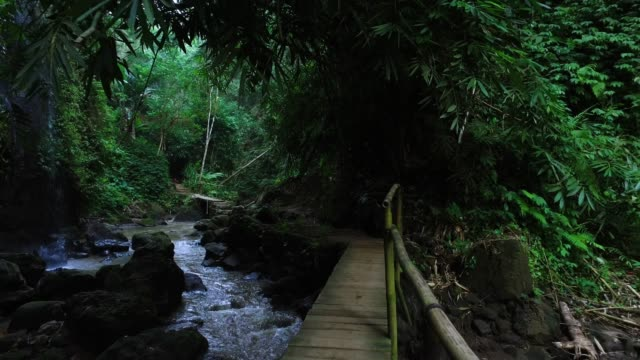 walking in bali jungle - sentiero video stock e b–roll