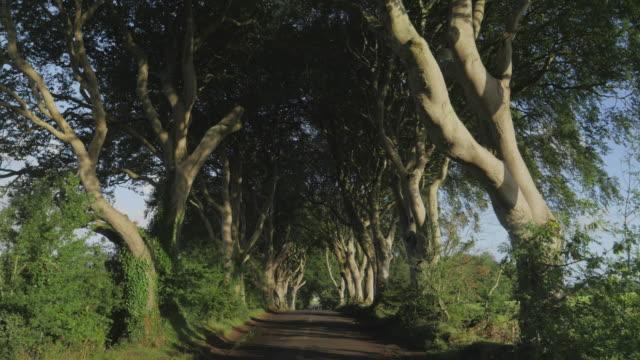 vidéos et rushes de marche sur route de campagne une haie sombre le matin d'automne, irlande du nord - route à une voie