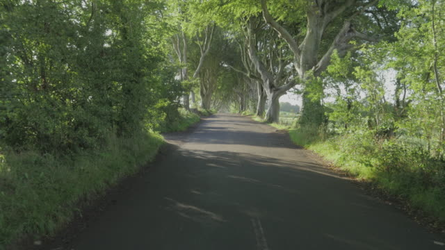 walking in dark hedge countryside road on autumn morning,northern ireland - footpath stock videos & royalty-free footage