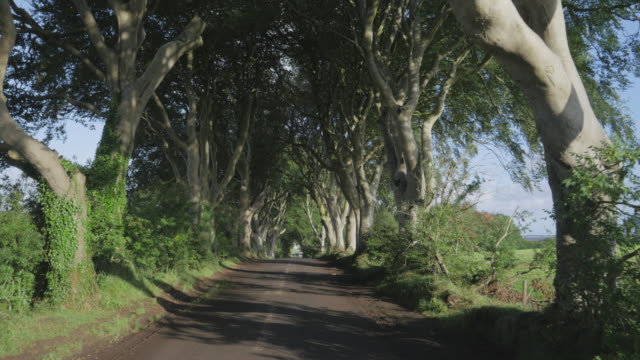 walking in dark hedge countryside road on autumn morning,northern ireland - rural scene stock videos & royalty-free footage