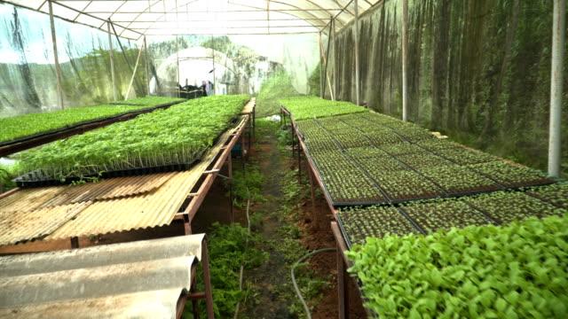 walking in greenhouse