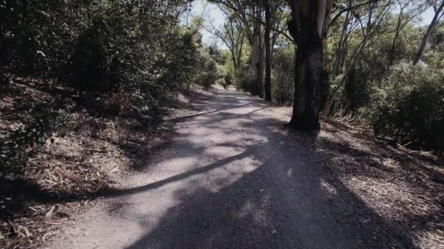 vídeos y material grabado en eventos de stock de caminar en la naturaleza - madera material