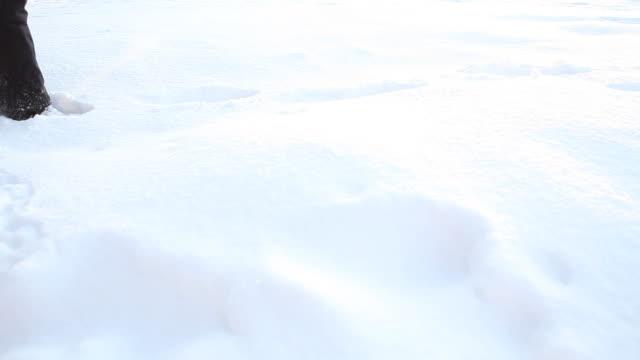 Spaziergang im Schnee (HD1080