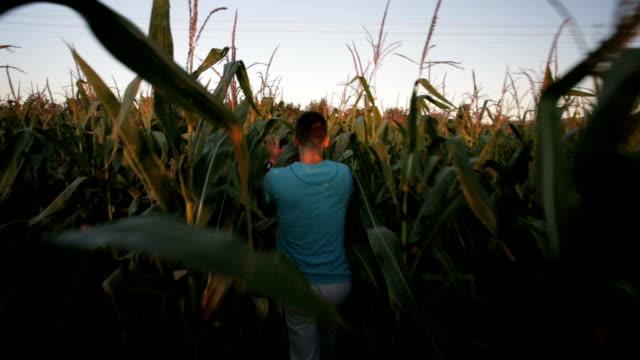 Wandelen in het maïsveld