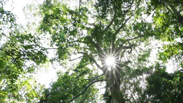 森を歩いています。