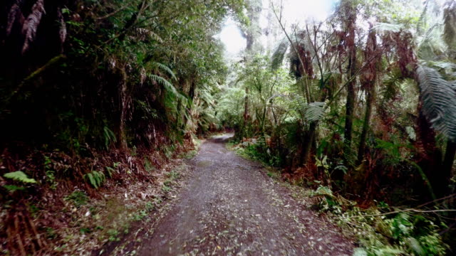walking in the new zealand forest - fern stock videos & royalty-free footage