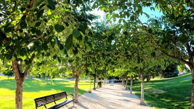 vidéos et rushes de marcher dans le parc au crépuscule - parc naturel