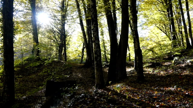 Walking in the trail near a river  in autumn