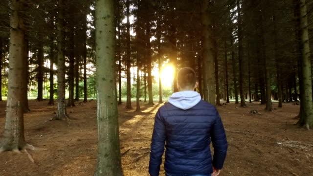 Zu Fuß im Wald in Richtung Sonne
