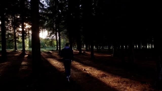 camminare nei boschi verso sole - luce vivida video stock e b–roll