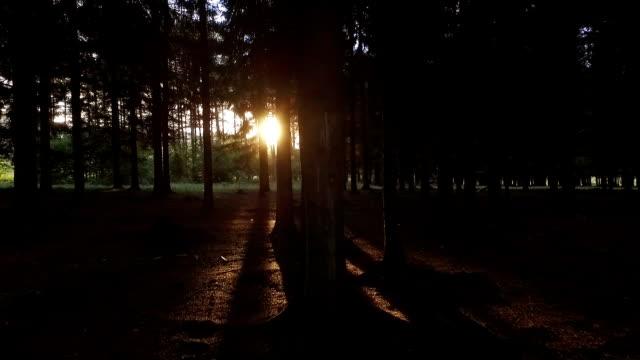 vídeos de stock, filmes e b-roll de caminhada na floresta, na direção de sol - ponto de vista de câmera