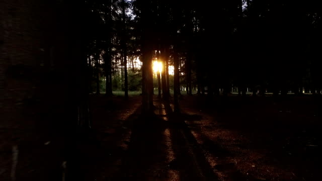 walking in the woods towards sun - walking point of view stock videos and b-roll footage