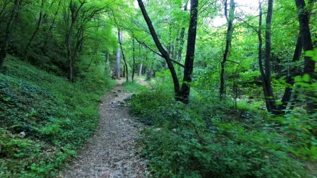 森の中を歩いて太陽